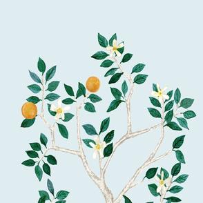 Custom Citrus Grove Megan Orange TREE