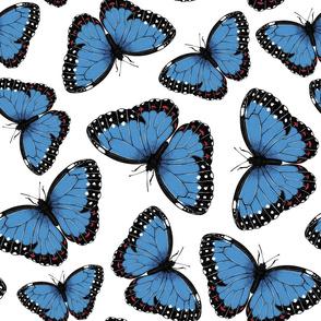 Blue morpho butterflies on white