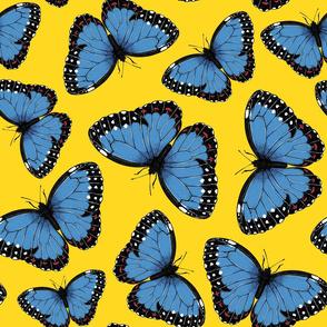 Blue morpho butterflies on yellow