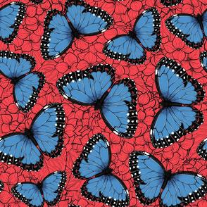 Blue morpho butterflies on hydrangea