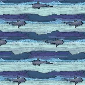 bird's eye whales