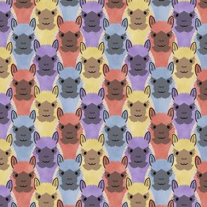 Alpaca pride - colorful party