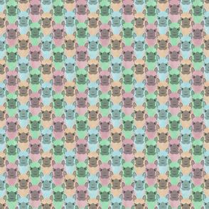 Small Alpaca pride - pastel party