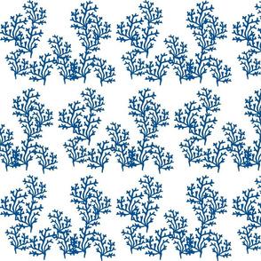 coral reef LG 8- ocean blue