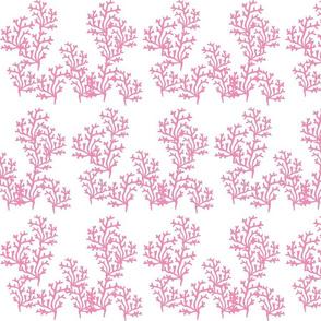coral reef  LG 8 - pink