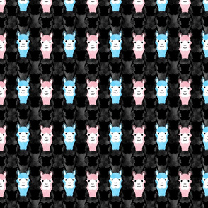 Small Alpaca pride - spotlight pink and blue