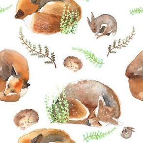 forest fox animal