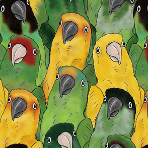 XL Quirky Conures