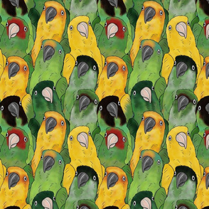 Large Quirky Conures