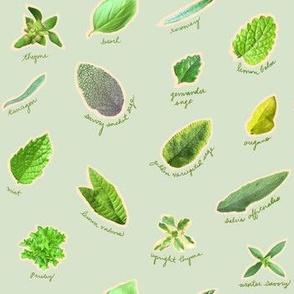 Herbs in the Garden Mint