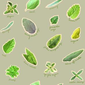 Herbs In The Garden Gray