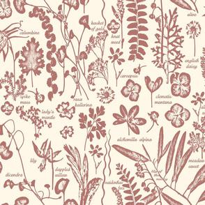 collectors garden sketchbook marsala lg