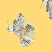 Hummingbird Gold