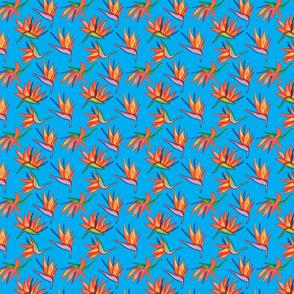 Strelitzia Party FLOWERS