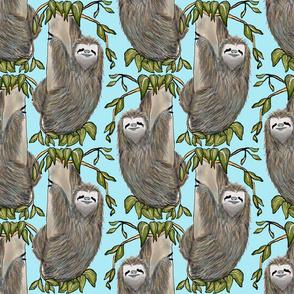 Peak-A-Boo Sloth