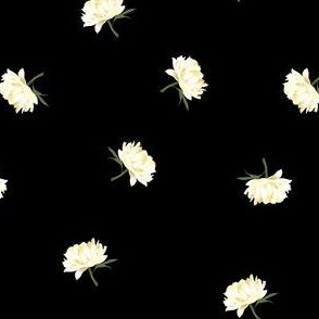 white peonies toss on black