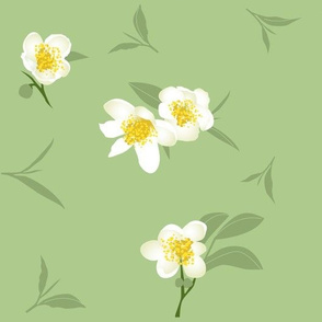 tea blossoms on light green - large