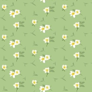 tea blossoms on light green - small