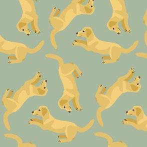 Yellow Labradors Allover