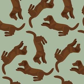 Chocolate Labradors Allover