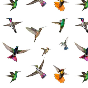 The birds of Hummingbird landing - White