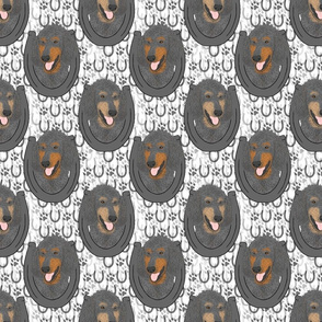 Phantom Standard Poodle horseshoe portraits