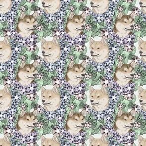 Floral cream Shiba Inu portraits