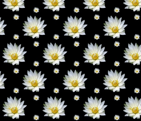 Rrrrwhite-waterlilies-on-black_contest264159preview
