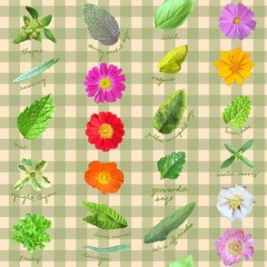 Garden Shoots And Ladders - Green Gingham_