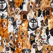 crowd of dogs