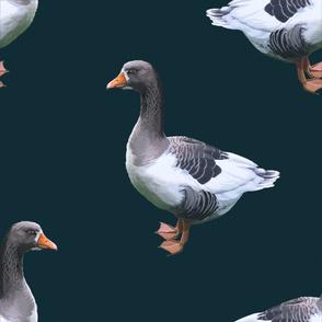 Goose bl