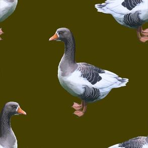 Goose gr