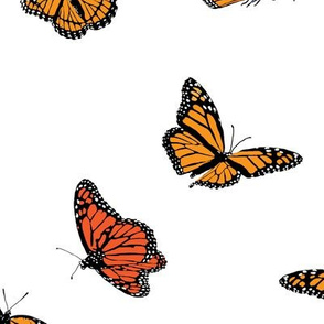 Classic Monarch Butterflies on White