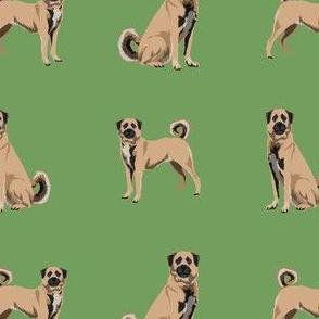 anatolian shepherd dog - anatolian dog, dog breed, dog breeds, dog fabric - green