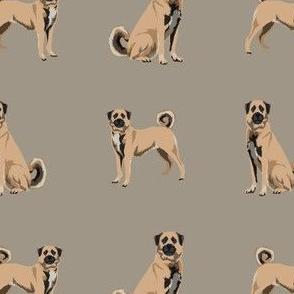 anatolian shepherd dog - anatolian dog, dog breed, dog breeds, dog fabric - brown