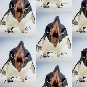 Angry_Penguin_01