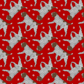 Trotting Wirehaired pointing Griffon and paw prints - red