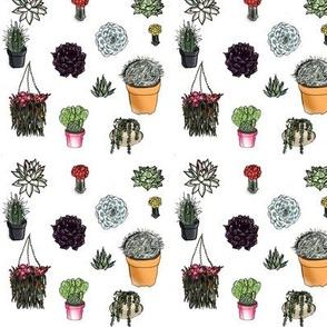 Succulent Succulents!