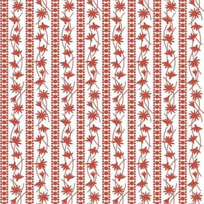 Rudbeckia White Red Stripe 2-01