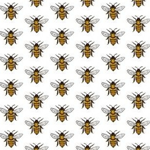 Black and yellow bees