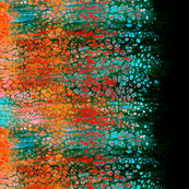 Pour paint 1 black with cyan green orange red pink