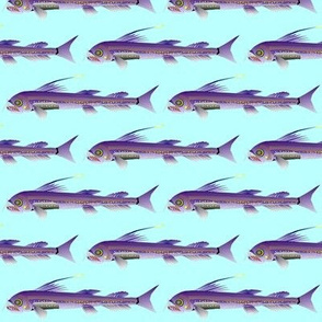 viperfish on light blue