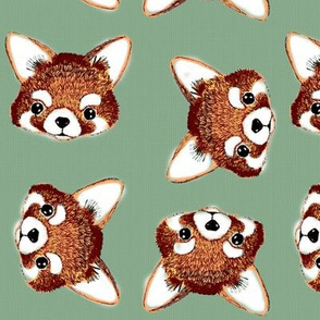 red panda faces