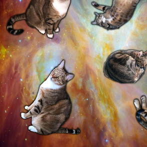 Orion the Space Cat