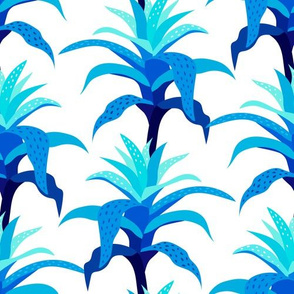 Bromeliads - Blue and White