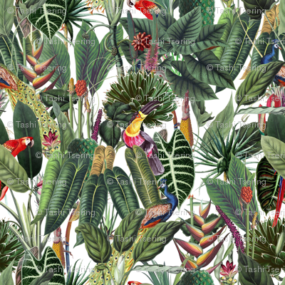 Rain-forest-patterns_preview