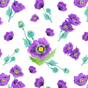 Purple Poppies in White