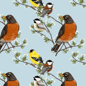 North American Backyard Birds
