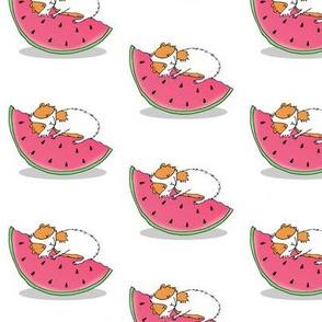 Guinea pig adoring a watermelon slice