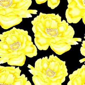 19-09c Jumbo Peony Lemon Yellow Black Floral Flower